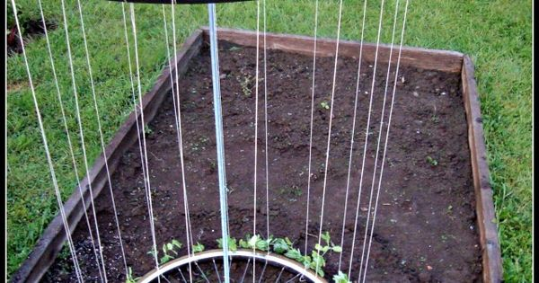SUCH A COOL IDEA!! Bike tire trellis!! http://thehomesteadsurvival.com/bike-tire-trellis-project/.UZ78nVfm9A4 Bike Tire Garden Trellis