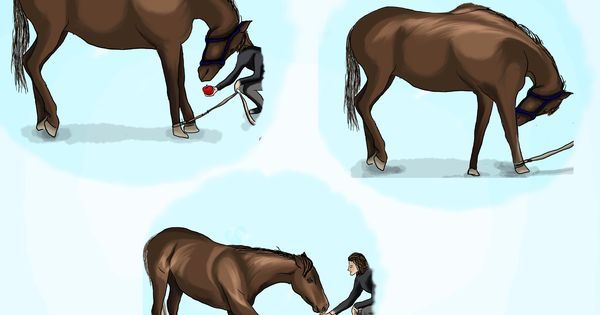 how to teach your horse how to bow
