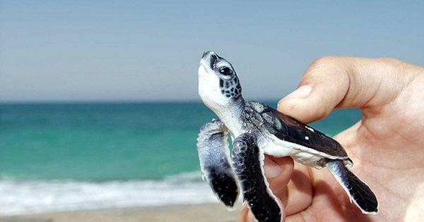 Baby turtle :) awww!