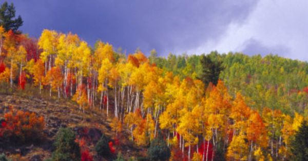 colorful aspens in logan canyon utah usa logan utah. Black Bedroom Furniture Sets. Home Design Ideas