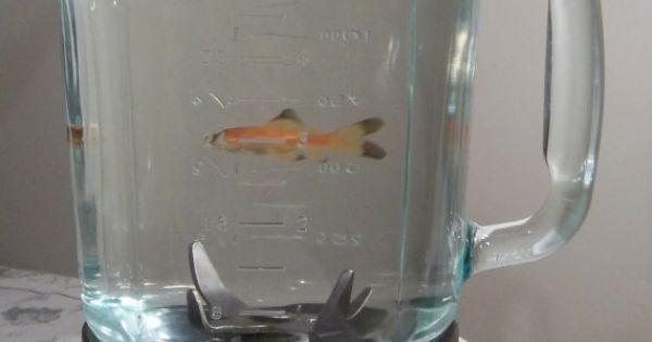 Fish bowl blender fish aquarium fish tank for betta or for Fish in a blender