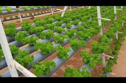 الزراعة المائية بالخرج Youtube Aquaponics Plants Enjoyment