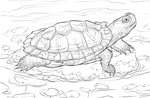 Red Eared Slider Coloring Page From Turtles Category Select From