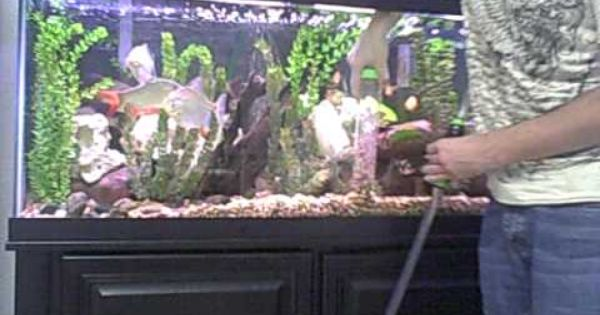 Cleaning Fish Tank Using An Auto Gravel Cleaner Youtube Cleaning Fish Fish Tank Fish,Rotisserie Oven