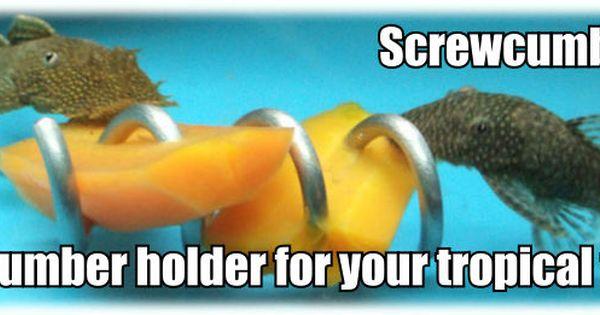 Tropical Aquarium Vegetable Holder Tropical Fish Store Cichlid Fish Tropical Aquarium