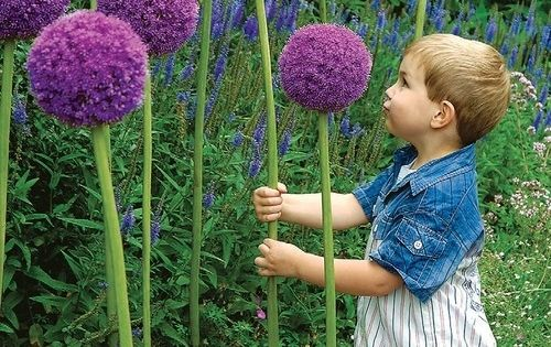 Plant a bunch of these giant allium flowers. ( so many fantastic