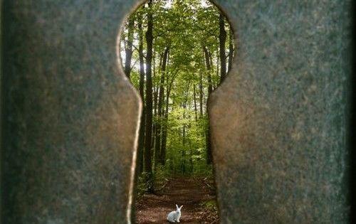 Alice In Wonderland Fine Art Photography White Rabbit