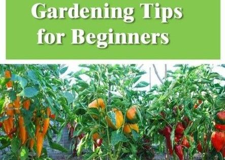 Productive vegetable gardening tips for beginners vegetable gardening pinterest - Gardening tips for beginners ...