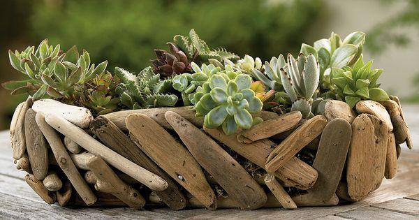 Driftwood Succulent Garden Plantes Grasses Dans Une Jardini Re En Bois Flott S Jardin