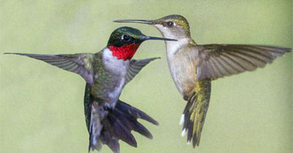 Pin On Minnesota Birding At Shing Wako