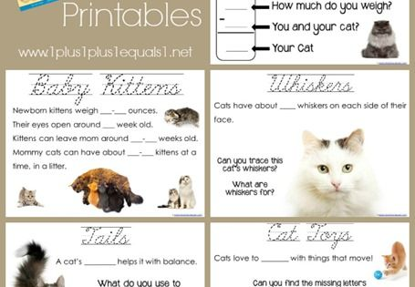 Worksheets For Cats Meow : Cats unit study based on the book quot why do meow st
