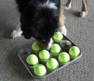 The Fabulous Muffin Tin Game For Dogs Brain Games For Dogs