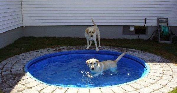 Outdoor Ideas Dog Pond Kiddie Pool Outdoor