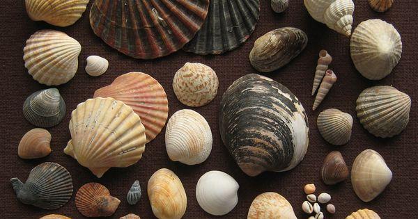 Shell island destin fl glampy vacation ideas for Craft store destin fl