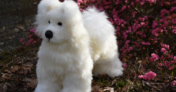 Super Soft And Cuddly Samoyed Pup Hand Made In Nz With Pure Nz Merino Wool Available Free Standing Or On Rockers Come Samoyed Puppy Old English Sheepdog Dogs