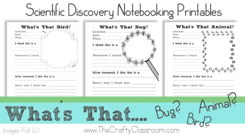 scientific method printables for animals bugs and birds free notebooking printables from the. Black Bedroom Furniture Sets. Home Design Ideas