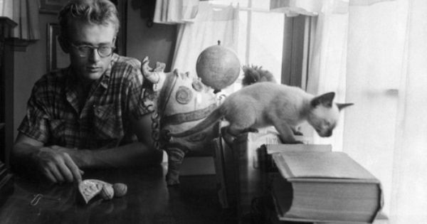 James Dean S Cat Marcus A Gift From Elizabeth Taylor James Dean