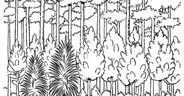 forest of trees coloring pages - photo#36