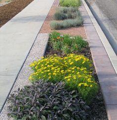 Parkway Landscaping Designs Google Search Sidewalk Landscaping Low Water Gardening Easy Landscaping