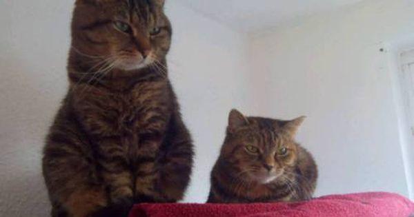 2 Katzen Abzugeben Gesundheitlichen Grunden In Bergkamen Katzen Abzugeben Katzen Bergkamen