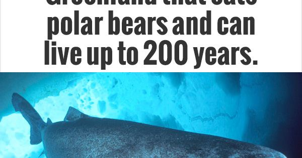 There's a shark in Greenland that eats polar bears and can ...