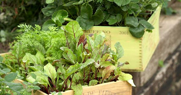 Great idea from our friends at better homes and gardens growing veggies in containers like - Better homes and gardens container gardening ...