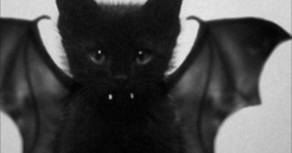 Black cat, bat Oh my gosh Leilah would look so adorable in