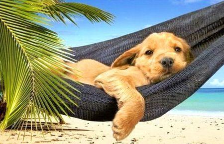 13 Lazy Summer Day Awwwwww Beach Green Hammock Ocean Palm Puppy Summer Animals Dogs Pet Dogs