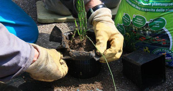 R alisation d 39 un bassin aquatique dans un demi tonneau de vin jardin jardin d 39 eau - Bassin dans un tonneau marseille ...