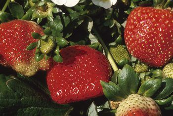 How To Grow Strawberries In Rain Gutters Strawberry Plants Growing Strawberries Strawberry Garden