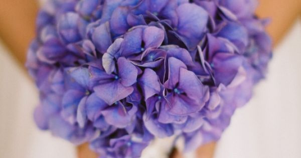 purple hydrangea bouquet -- my favourite flower