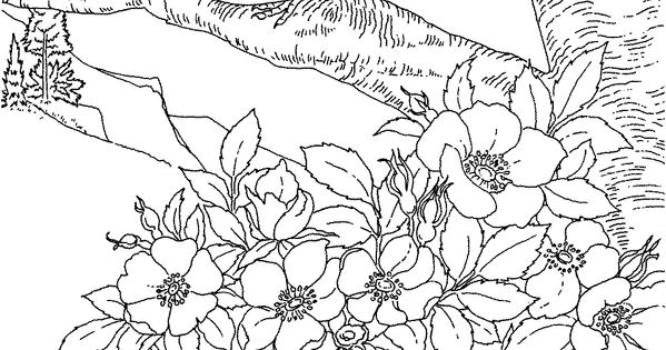 Free Printable Coloring PageIowa State Bird and Flower