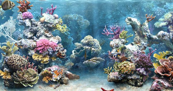 free aquarium backgrounds printable website of tilopink