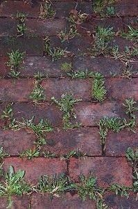 Baking Soda Neutralizes The Ph In The Soil And Nothing Will Grow There Lawn And Garden Backyard Garden