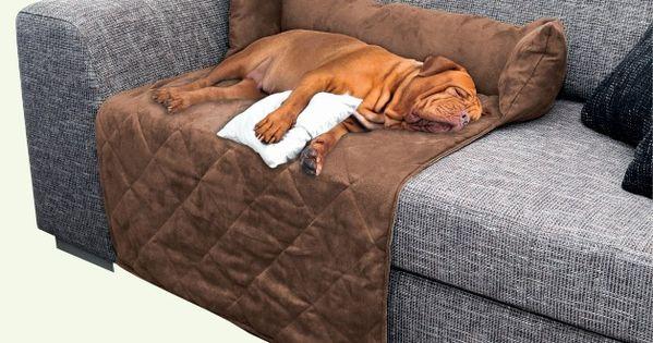 Caliente perro en la cama cama para perros camas para for Camas chinas baratas