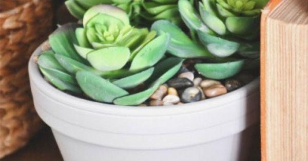 DIY Succulent Planter - | Cas, The o'jays and Succulent planters