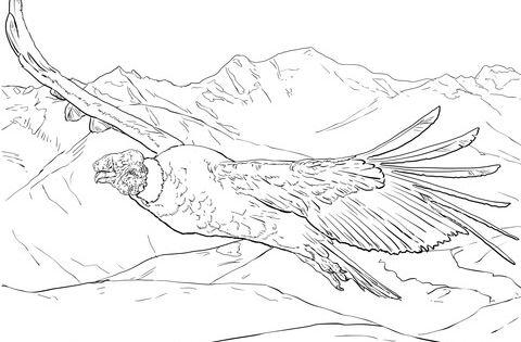 Dibujo Para Colorear Condor Andino Volando Dibujos Para Colorear Imprimir Gratis Condor De Los Andes Condor Dibujo Condor Para Colorear