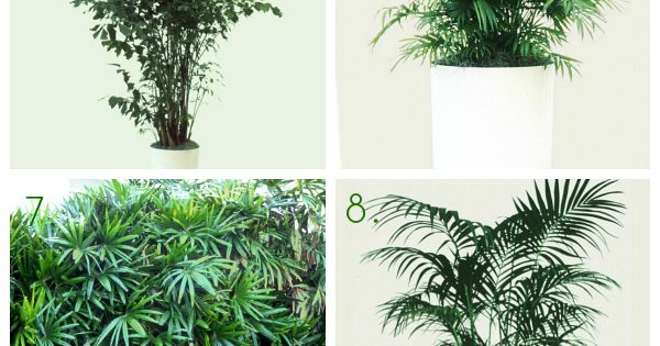 20 Gorgeous House Plants That Can Take Full Shade Indoor