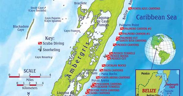 Ambergris Caye Dive Map And Reef Creatures Identification