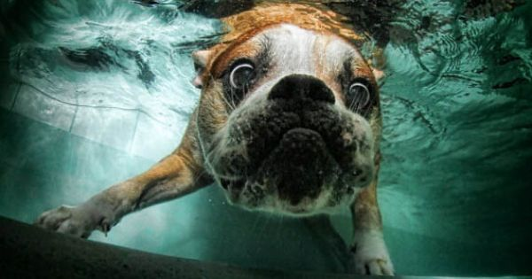 Seth Casteel's Underwater Dog Photography 17