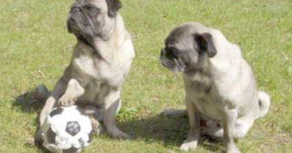 Friends Dog Or Friend S Dog Apostrophe
