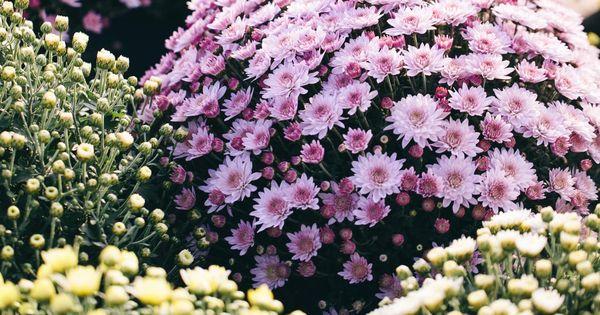 5404f981b4752c9d51d9bc8da045bc86 - Winter Flowering Shrubs For Small Gardens