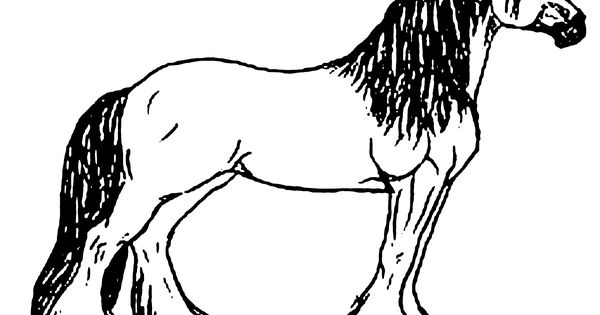 Coloring Pages of Horses 3 Coloring