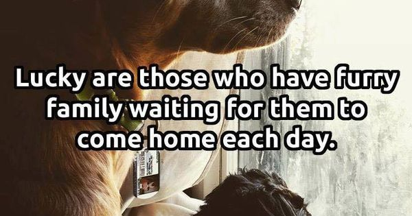Lucky Are Those Who Have Furry Family Waiting For Them To