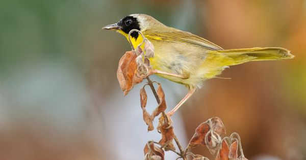 Pin On Exotic Birds