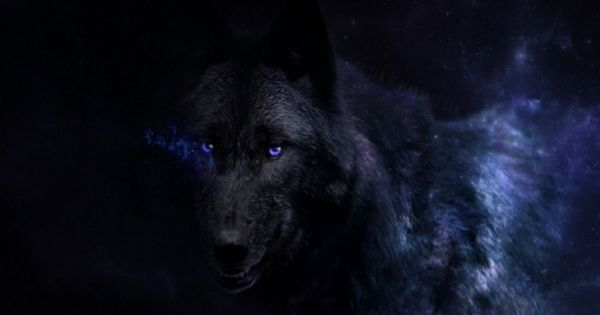 Black Beauty With Blue Eyes Desktop Nexus Wallpapers Wolf With Blue Eyes Black Wolf Fantasy Wolf