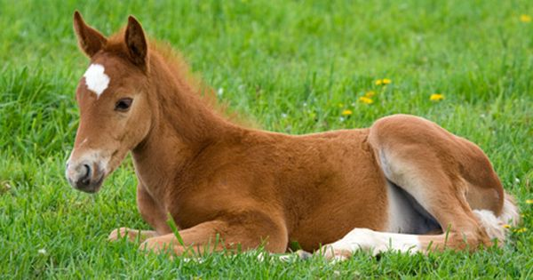 foal horse cute baby animals wild animals| http://my-wild-animal-collections.13faqs.com