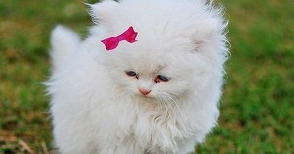 Frases Com Animais De Estimação Para Facebook: Animais Fofos - Pesquisa Google