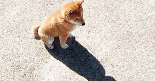 Dog watching at his shadow that looks like the Batman and says: