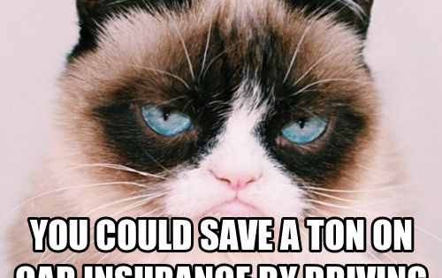 grumpy cat cats and car insurance on pinterest. Black Bedroom Furniture Sets. Home Design Ideas